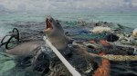 plastic-pollution-seal-trapped